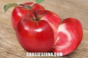 táo đỏ 1